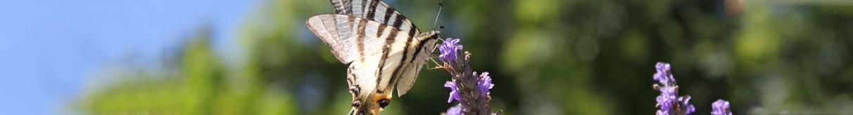 Header_vlinder